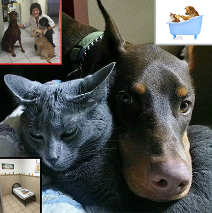 Collage With a Dog and Cat